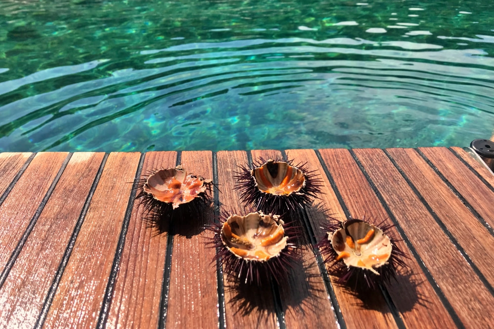 Photograph of sea urchins