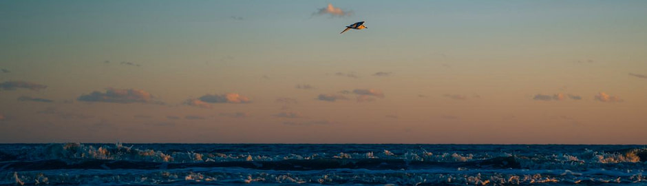 Photograph of a seagull at sunset
