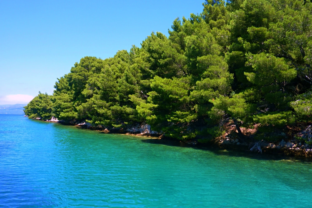 Photograph of trees along the shores of Mljet